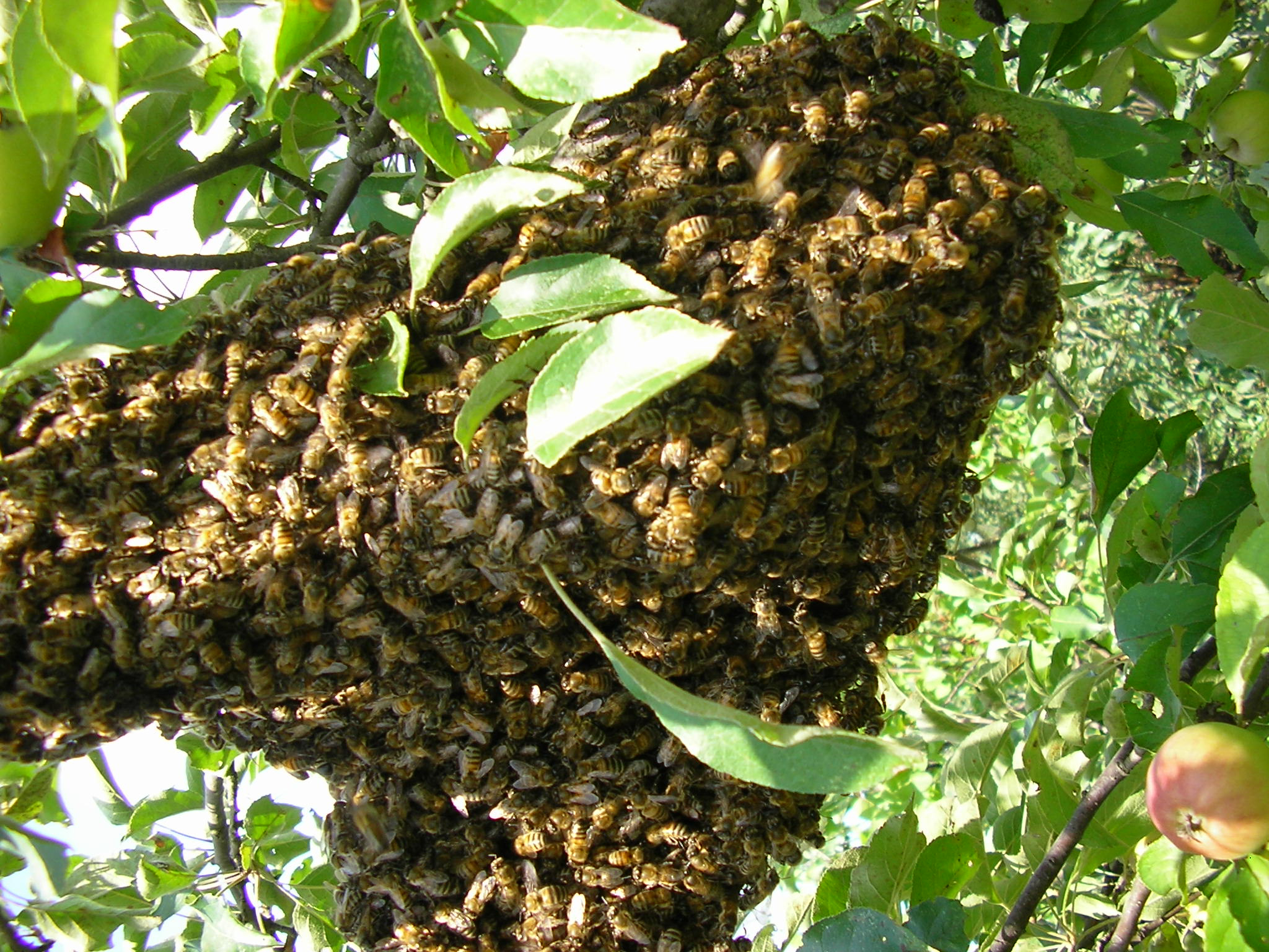 Importance of Bees