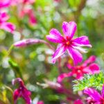 Importance of Botany