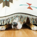 tips to calm your dog during a rain with thunder