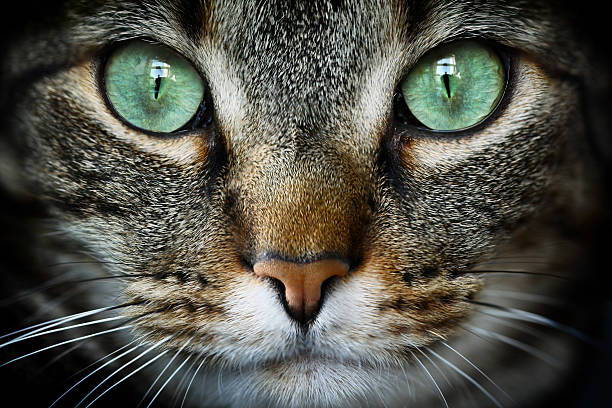Cats With Different Colored Eyes