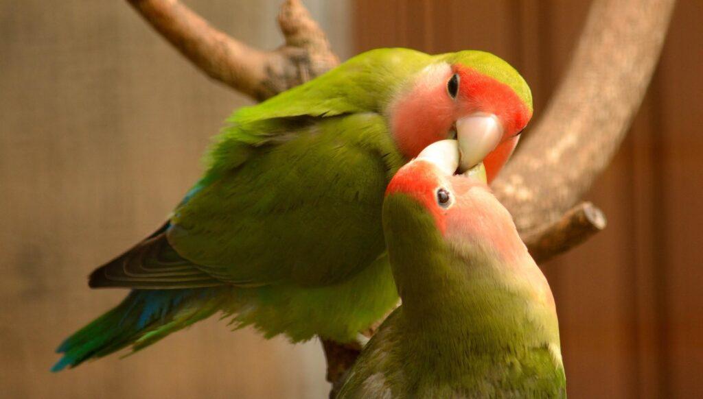 Importance of Birds