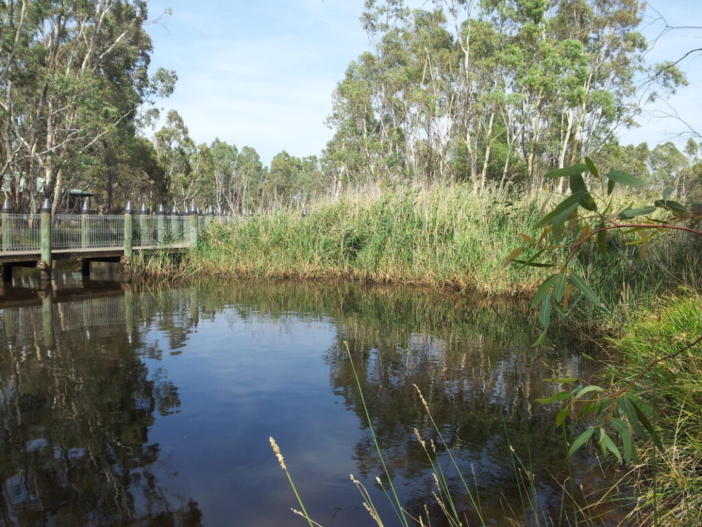 Importance of Wetlands to The Environment | Threats to wetlands