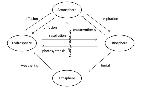 Steps In Carbon Cycle